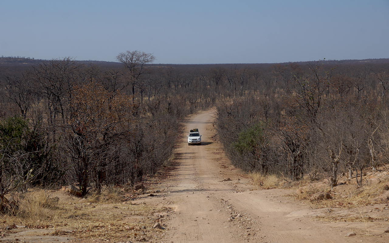 Dusty road through Hwange thicket